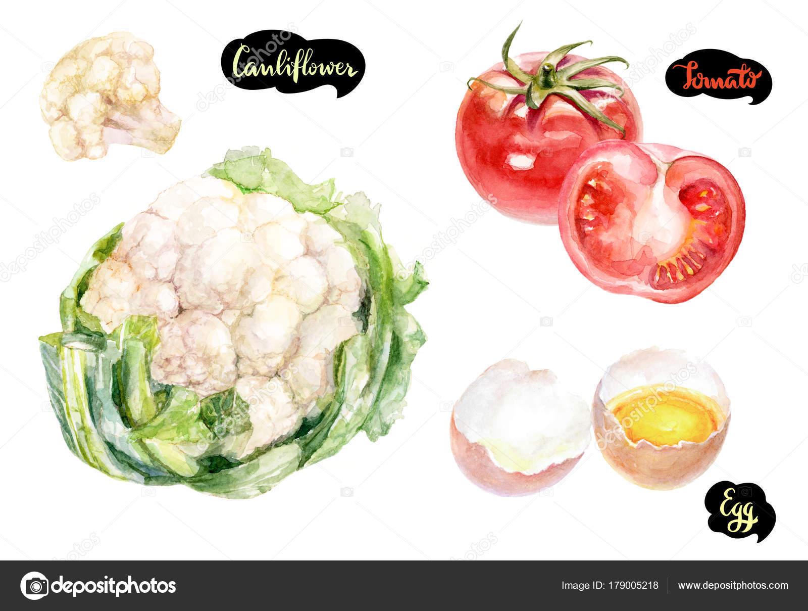 kitchen herb kit outdoor sink 香草和香料厨房水彩套装花椰菜洋葱水彩手绘插图在白色背景上被隔离 图库 香草和香料厨房水彩套装花椰菜洋葱水彩手绘插图在白色背景上被