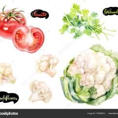 Kitchen Herb Kit Tap 香草和香料厨房水彩套装花椰菜西红柿水彩手绘插图在白色背景上隔离 图库