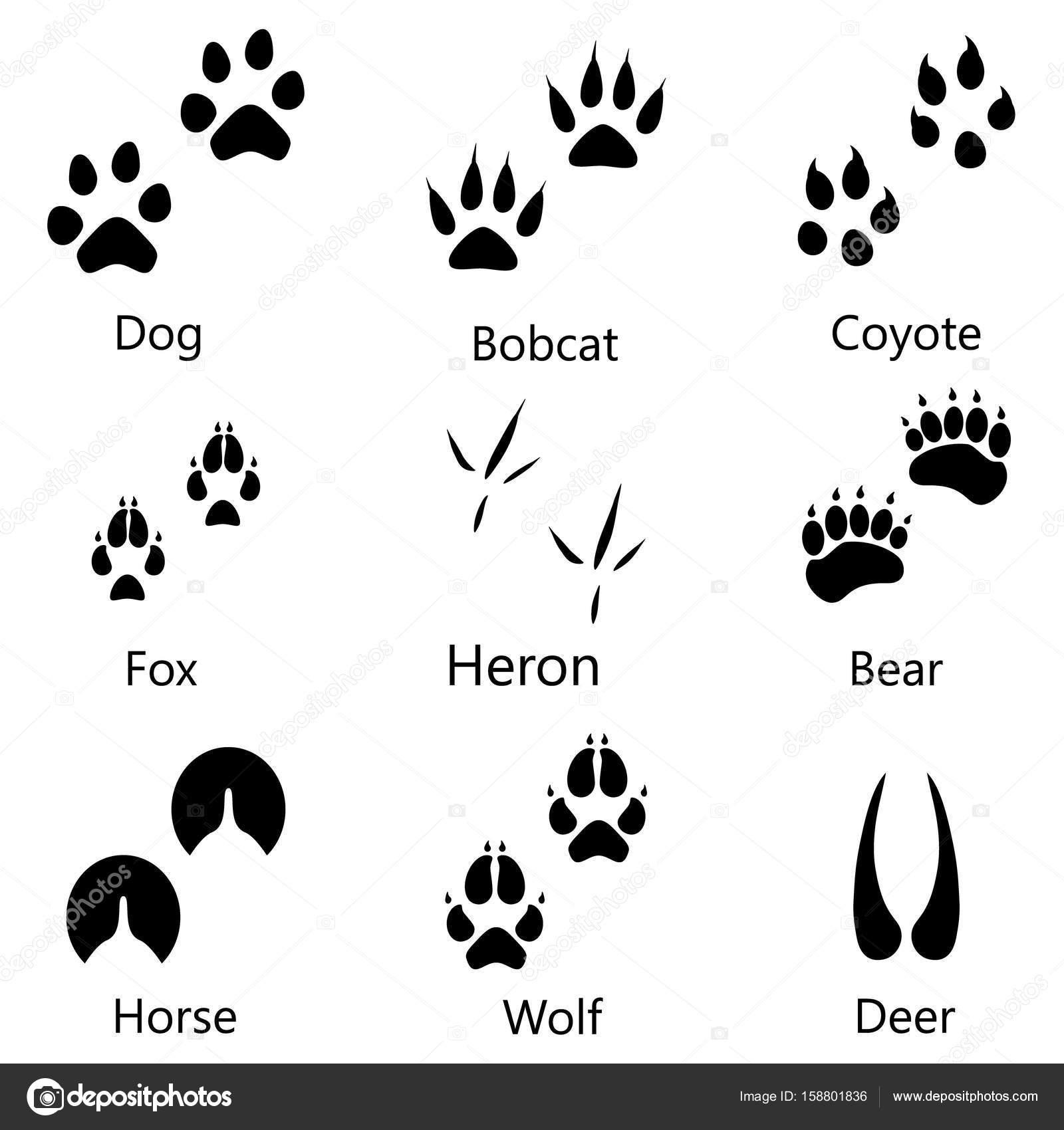Animal footprints raster — Stock Photo © viktorijareut