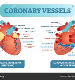coronary vessels anatomical health care vector illustration labeled diagram heart blood flow system with blood vessel scheme medical information poster  [ 1600 x 1085 Pixel ]