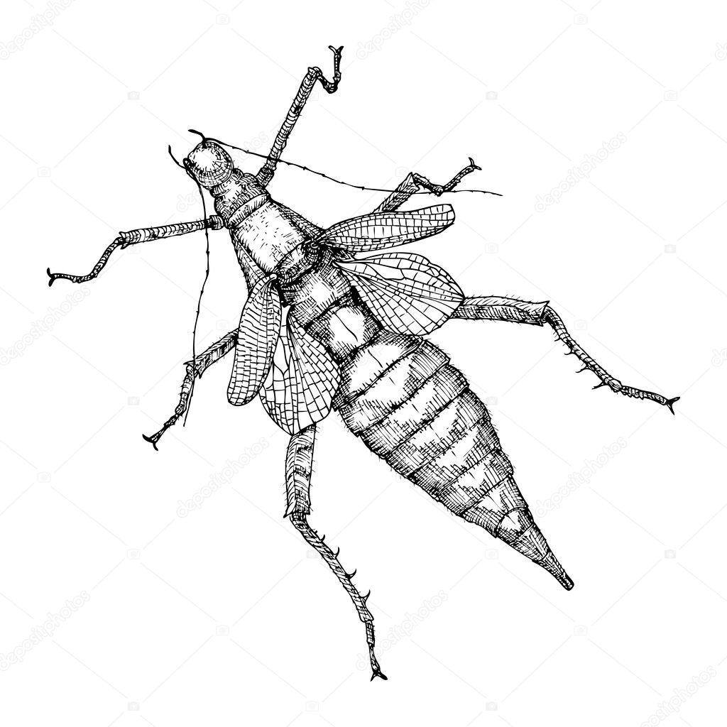 Hand Drawn Beetle Sketch