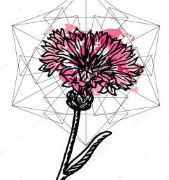 art poster botany carnation and geometry stock vector [ 808 x 1024 Pixel ]