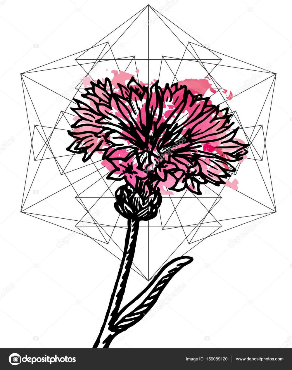 medium resolution of art poster botany carnation and geometry stock vector