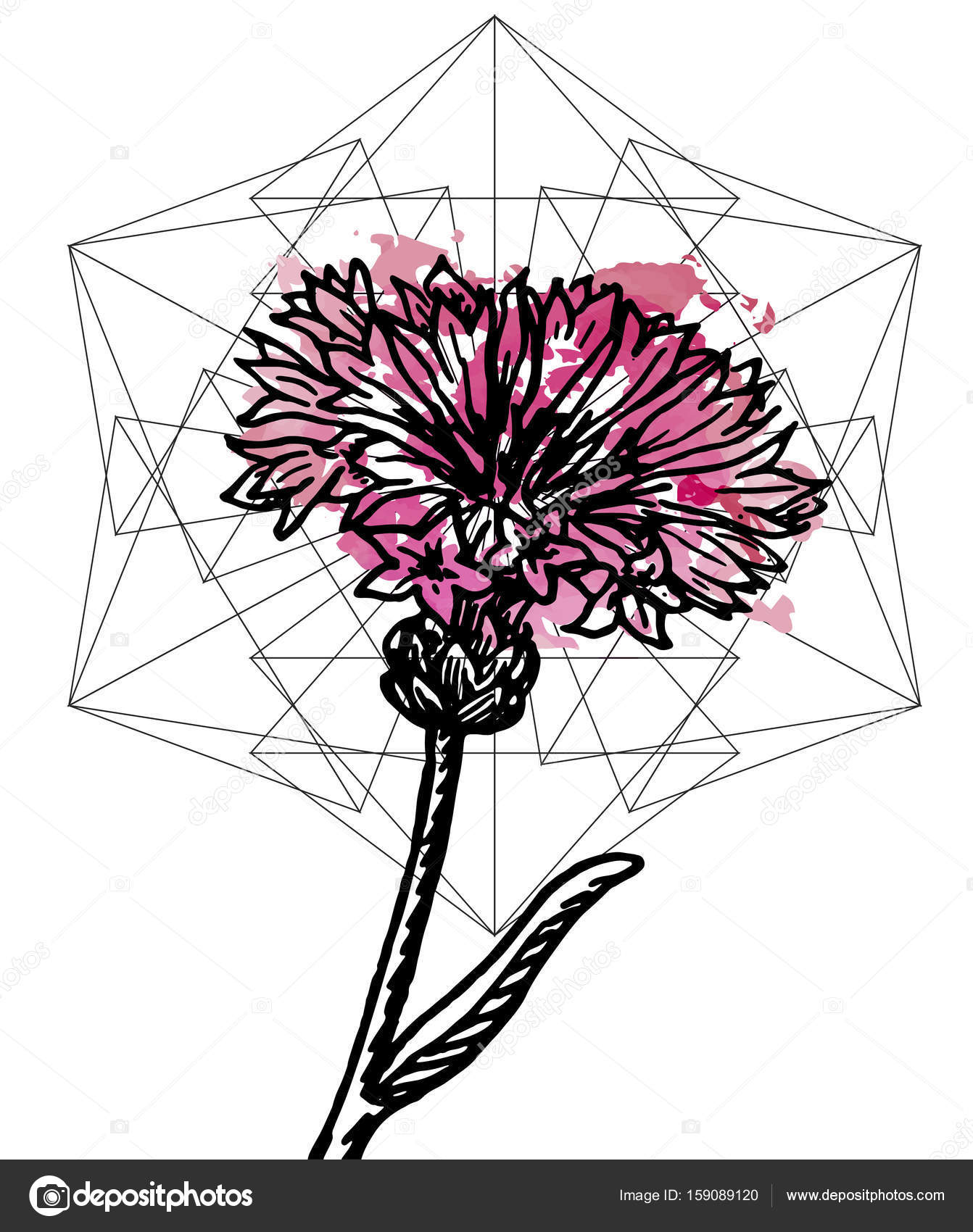 hight resolution of art poster botany carnation and geometry stock vector