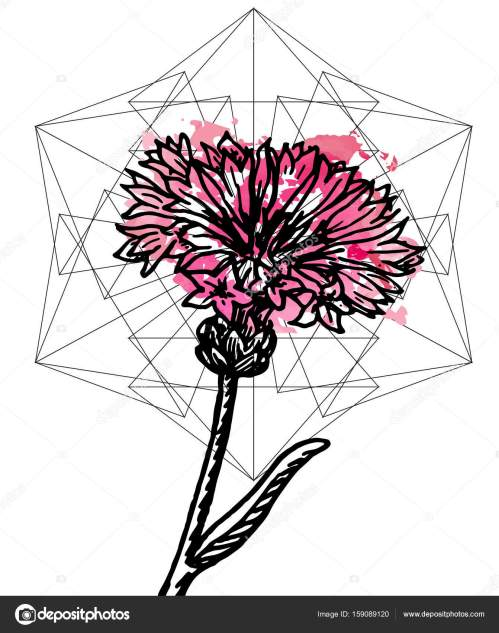 small resolution of art poster botany carnation and geometry stock vector