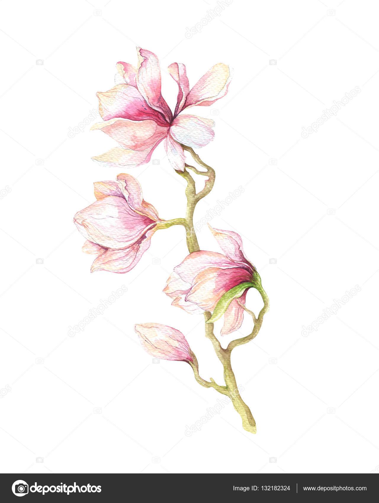 Magnolien Tapete Interesting Aquarell Malerei Magnolia