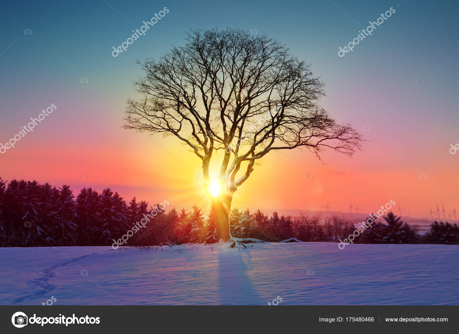 Paesaggio di tramonto di inverno con neve e albero campo
