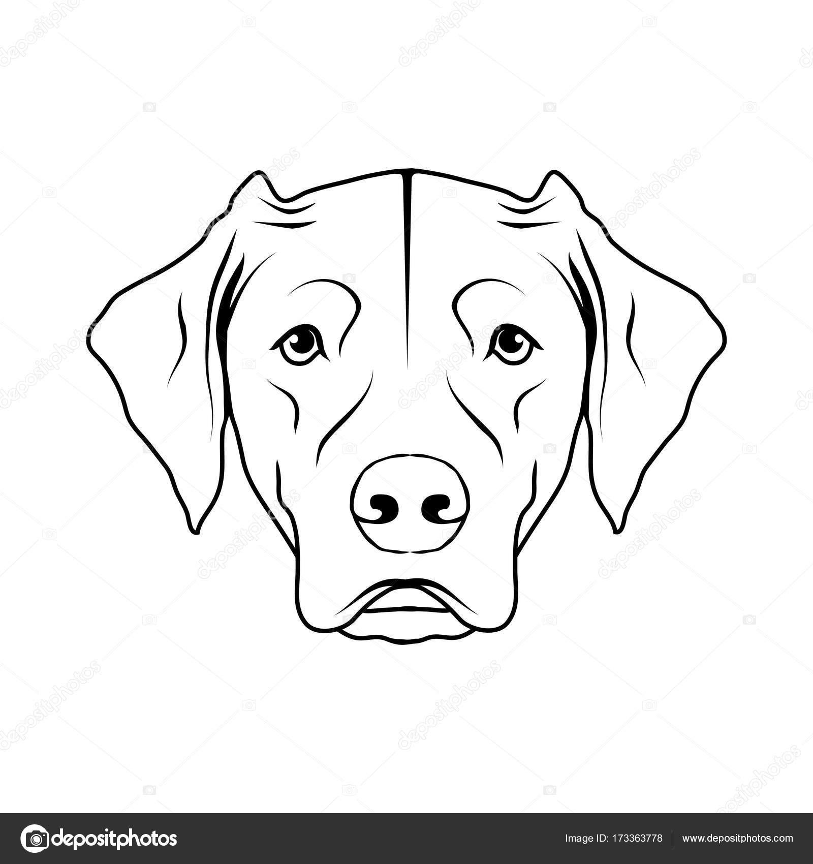 Labrador Dog Logo