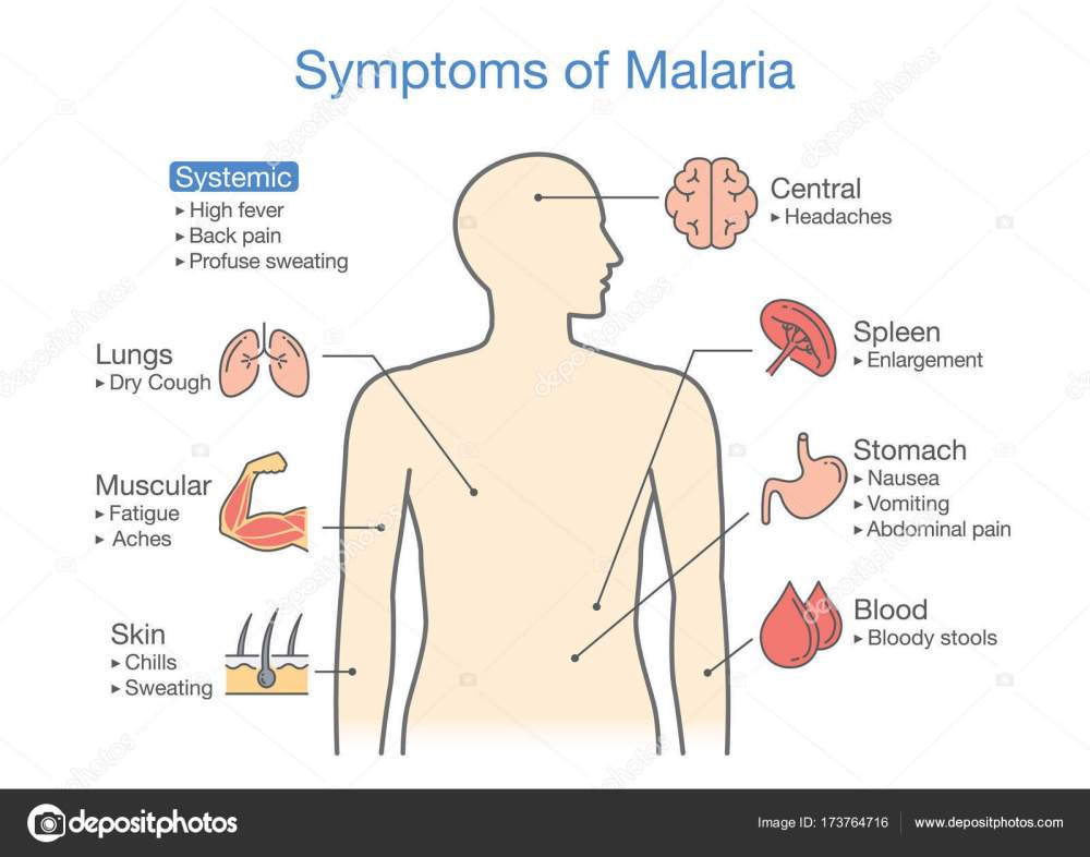 medium resolution of diagram for patient with malaria symptoms appear illustration about medical and health vector by solar22