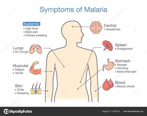 small resolution of diagram for patient with malaria symptoms appear illustration about medical and health vector by solar22