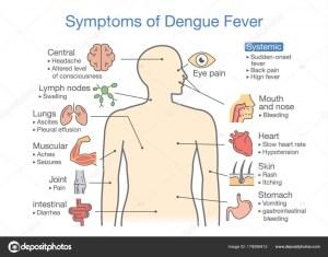 Symptoms Dengue Fever Patient Illustration Diagram Health