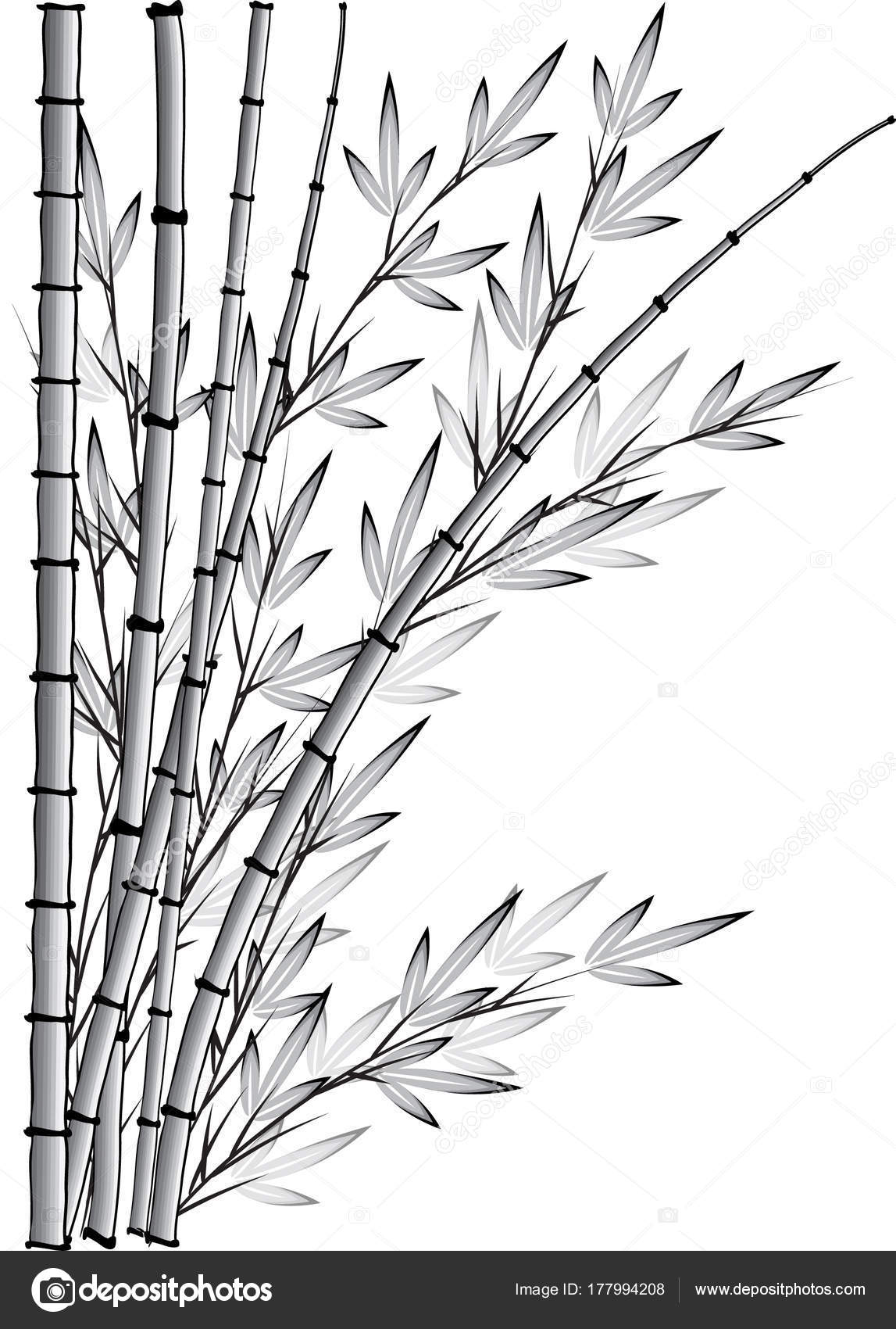 Bamboo Tree Vector Drawing — Stock Vector © wenpei #177994208