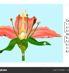 vector flower parts diagram stem cross section anatomy of plant flower cross section diagram flower cross section diagram [ 1024 x 780 Pixel ]