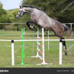 Beautiful Young Purebred Horse Jump Over Barrier Free Show Jump Stock Photo C Accept001 324818430