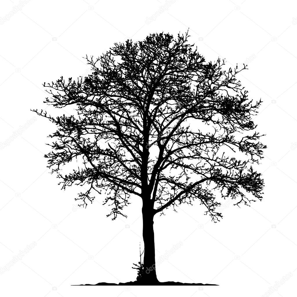 Baum ohne Blätter-Vektor-Illustration Eps 10