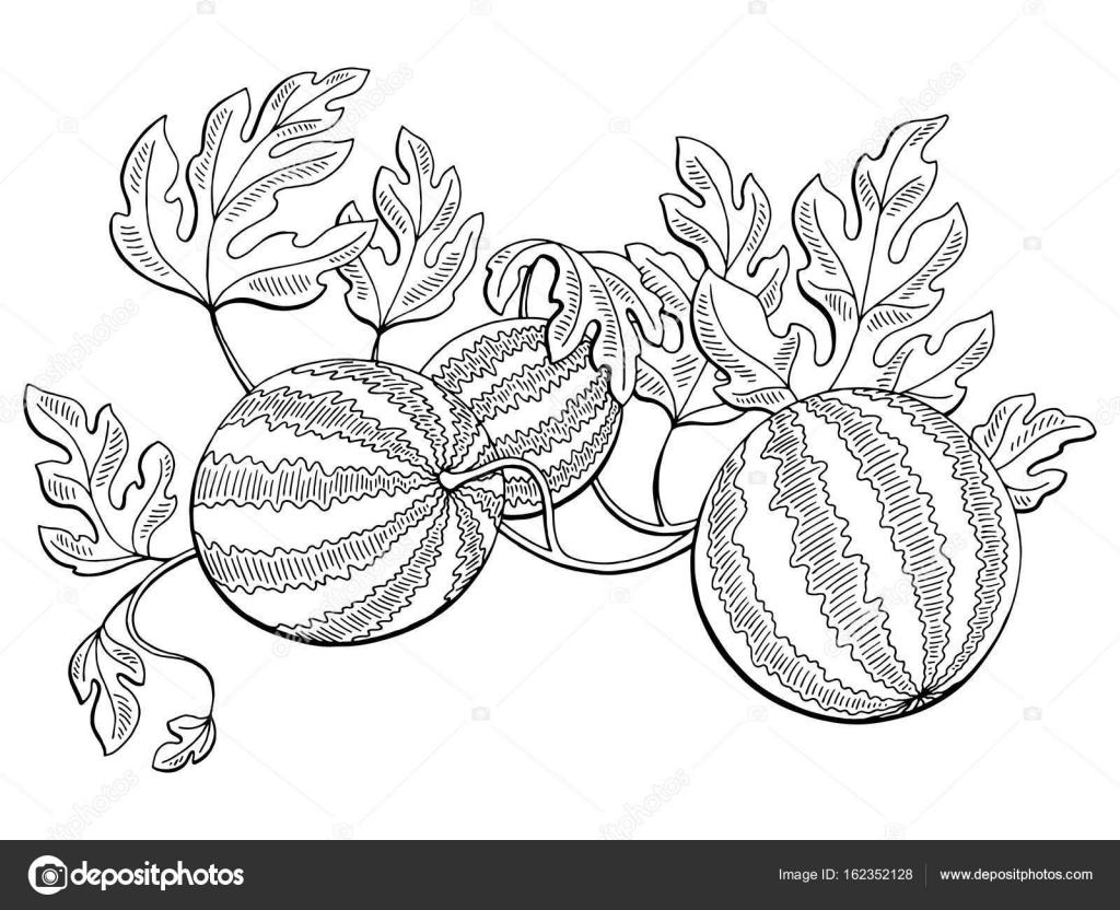 Vodni Meloun Graficke Bush Rostlin Erne Bile Izolovane