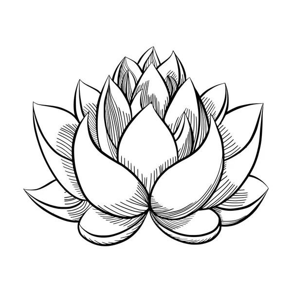 hand tekenen van water lily, lotus, bloem — Stockvector