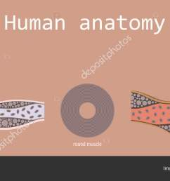 types of muscle tissue of human body diagram including cardiac skeletal smooth with example of heart [ 1600 x 724 Pixel ]