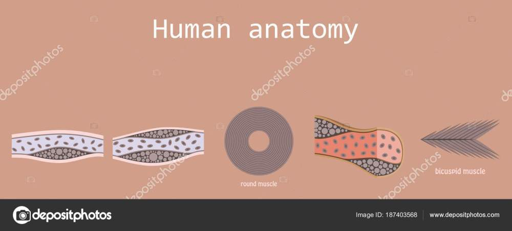 medium resolution of types of muscle tissue of human body diagram including cardiac skeletal smooth with example of heart