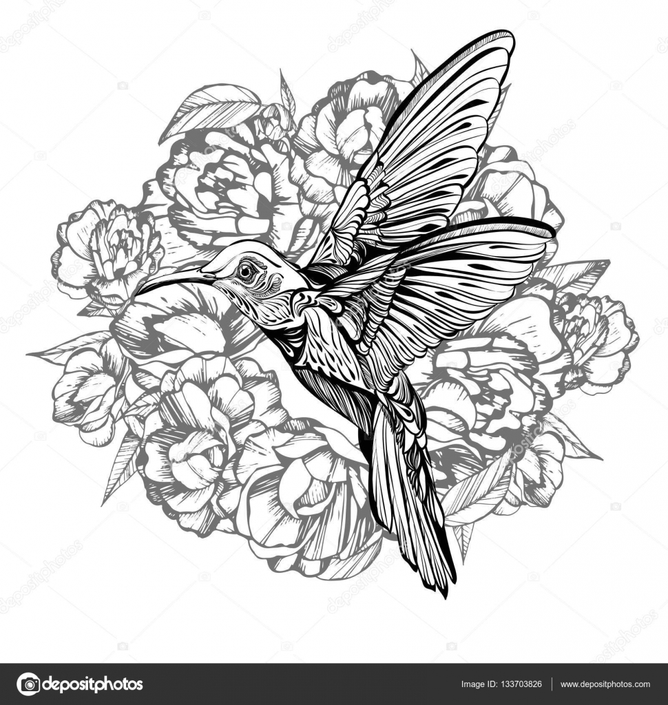 Sketch Hummingbird And Flower Drawing
