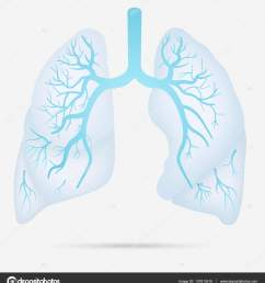 human lungs anatomy for asthma tuberculosis pneumonia lung cancer diagram in detail illustration [ 1520 x 1700 Pixel ]