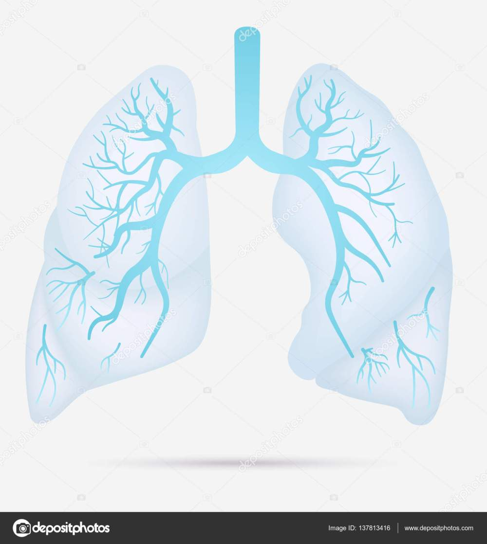 medium resolution of human lungs anatomy for asthma tuberculosis pneumonia lung cancer diagram in detail illustration