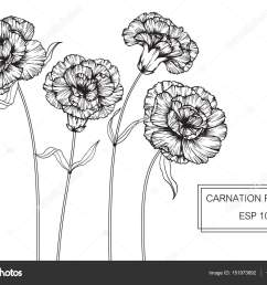 carnation flowers drawing and sketch with line art on white backgrounds vector by suwi19 [ 1600 x 1167 Pixel ]