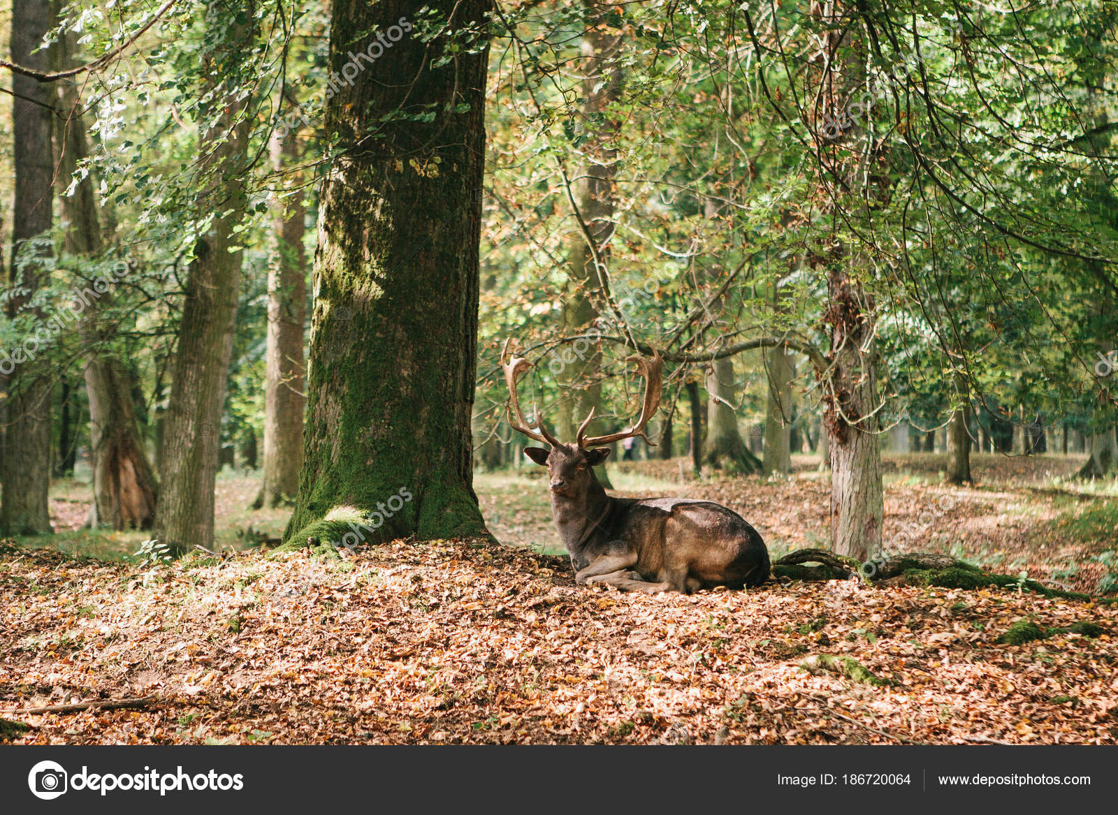 Wild Deer In The Forest Animal In A Natural Habitat