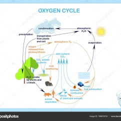 Basic Carbon Cycle Diagram Face Head Pain List Of Synonyms And Antonyms The Word Oxygen