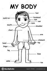 Human Body Parts Clipart Black And White