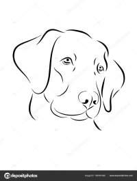 Disegni Da Colorare Di Cani Labrador