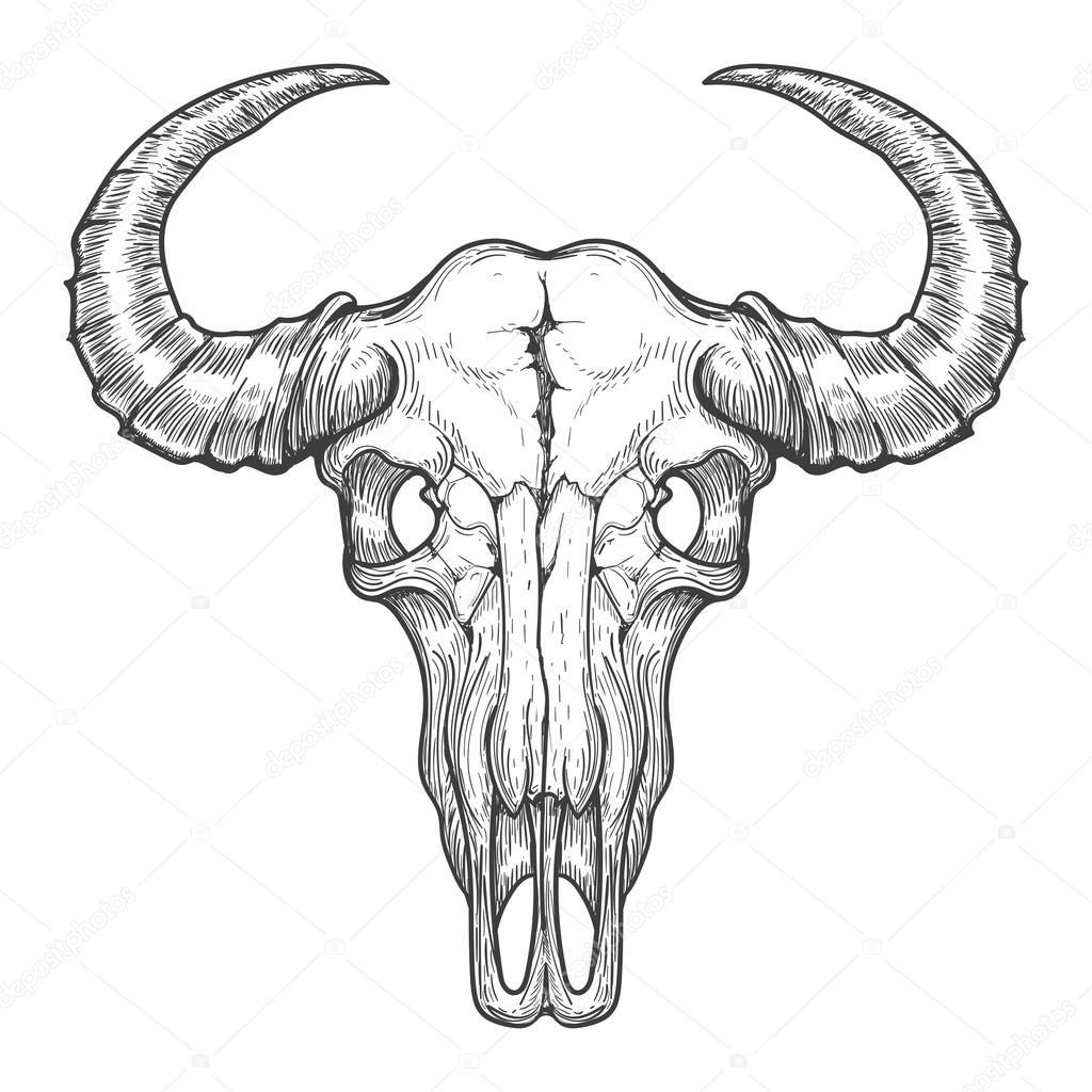 Desenho De Cranio De Bufalo