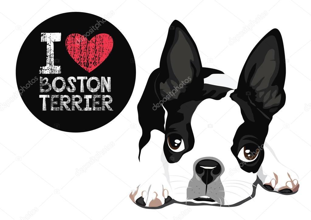 Download I Love Boston Terrier Vector — Stock Vector © puaypuayzaa ...