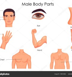 medical education chart of biology for male body parts diagram stock vector [ 1024 x 832 Pixel ]