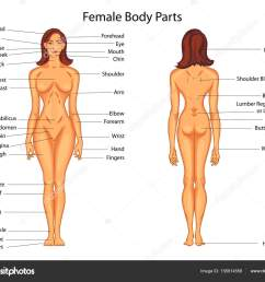 medical education chart of biology for female body parts diagram stock vector [ 1024 x 832 Pixel ]
