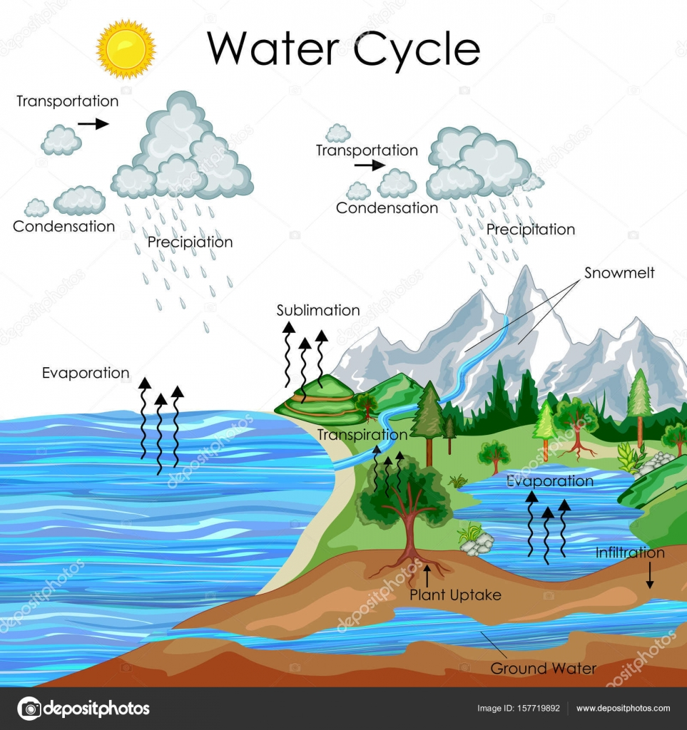 hight resolution of education chart of water cycle diagram stock vector