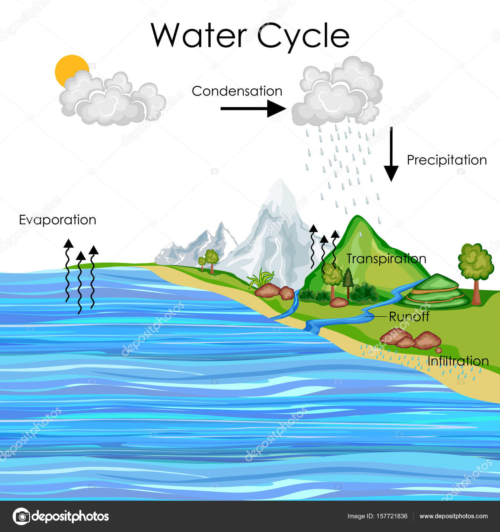 education chart of water
