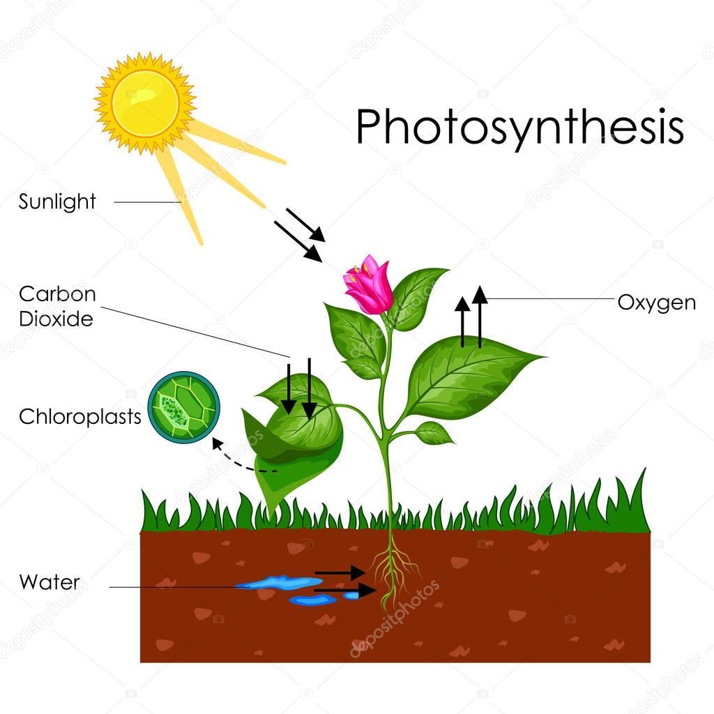 Graphique De L Enseignement De Biologie Pour Le Diagramme