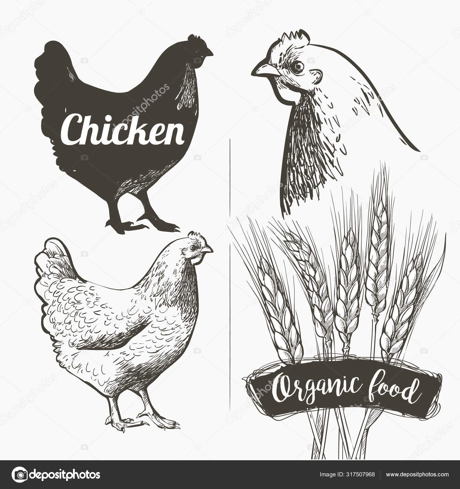 Chicken Silhouette White : Download 11,000+ royalty free