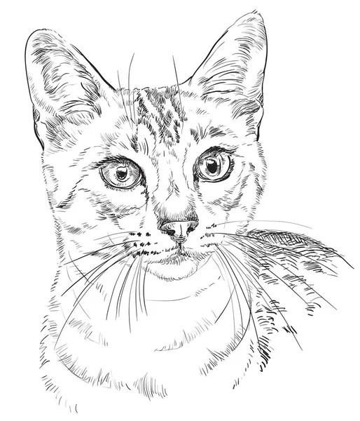 Cat drawing — Stock Vector © silvertiger #6099119