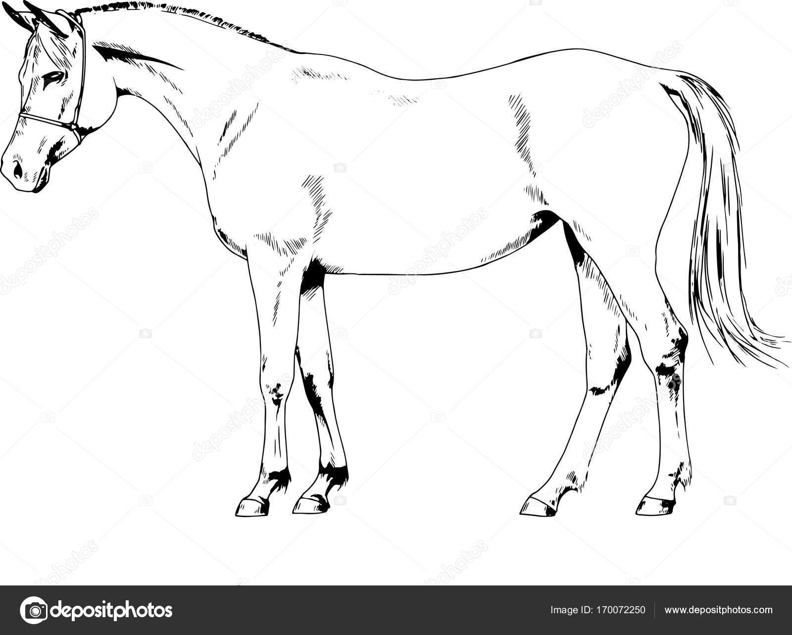Cavalo de corrida sem um chicote de fios desenhado à mão