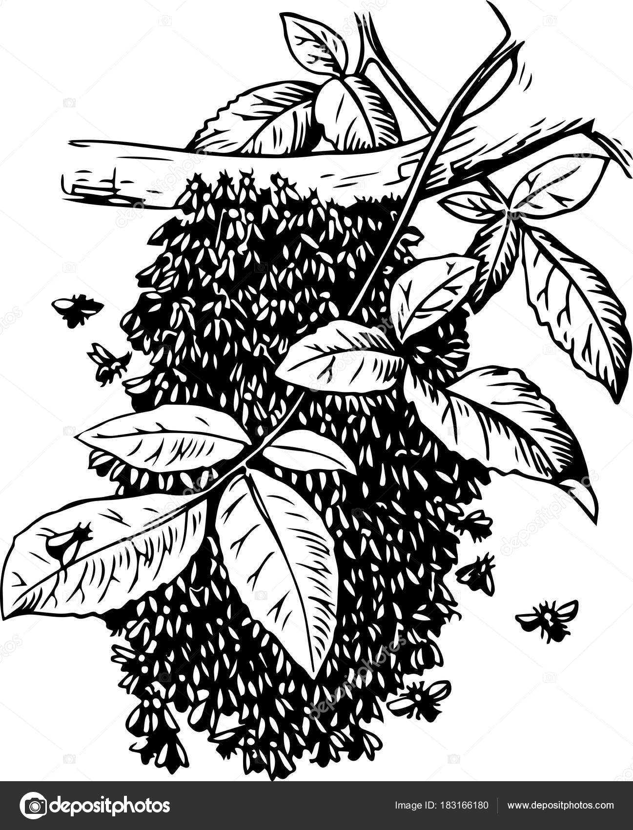 Bee Hive drawing — Stock Photo © serg-eril #183166180