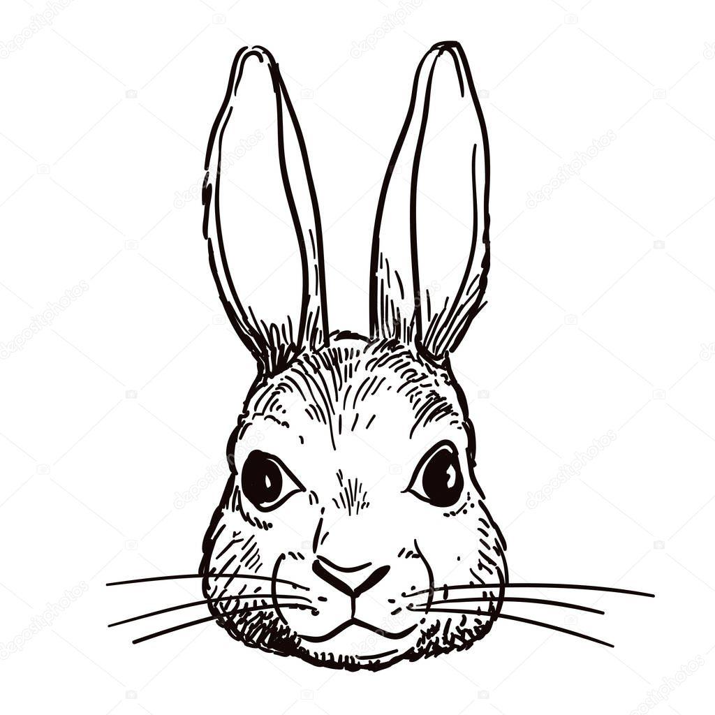 Pen And Ink Rabbit Head Sketch
