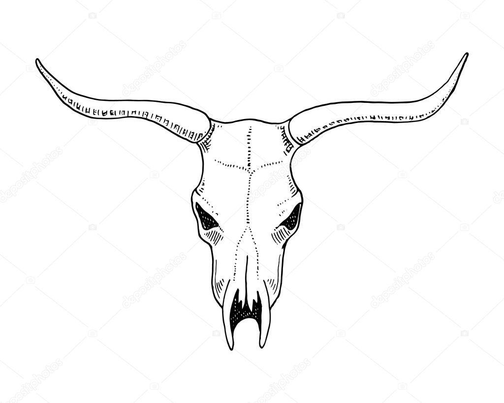 生物学や解剖学のイラスト。刻まれた手の古いスケッチとビンテージ スタイルで描画されます。頭蓋骨や骨格のシルエット。牛