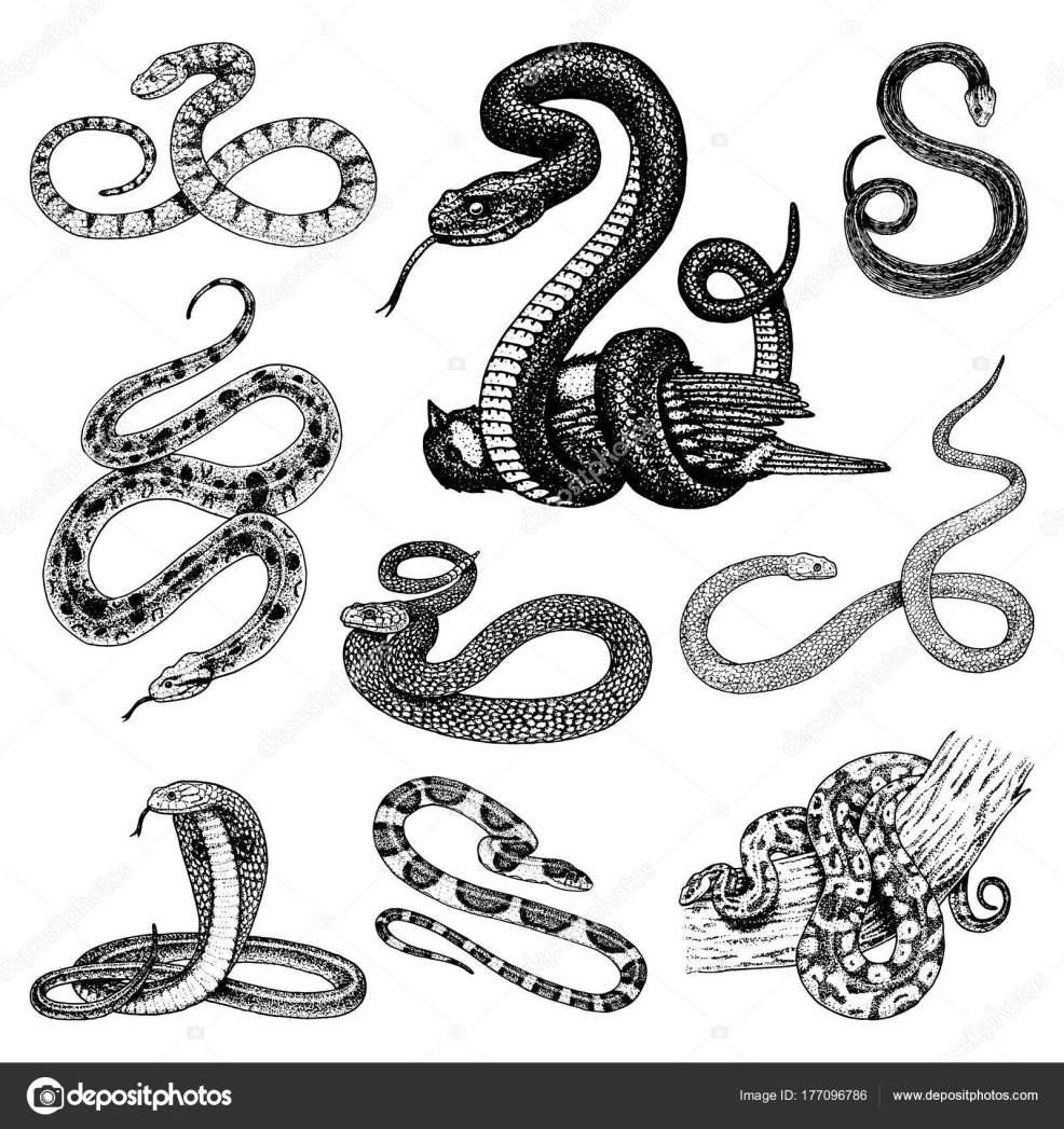 установите Viper змея змей кобра и Python анаконда или гадюки