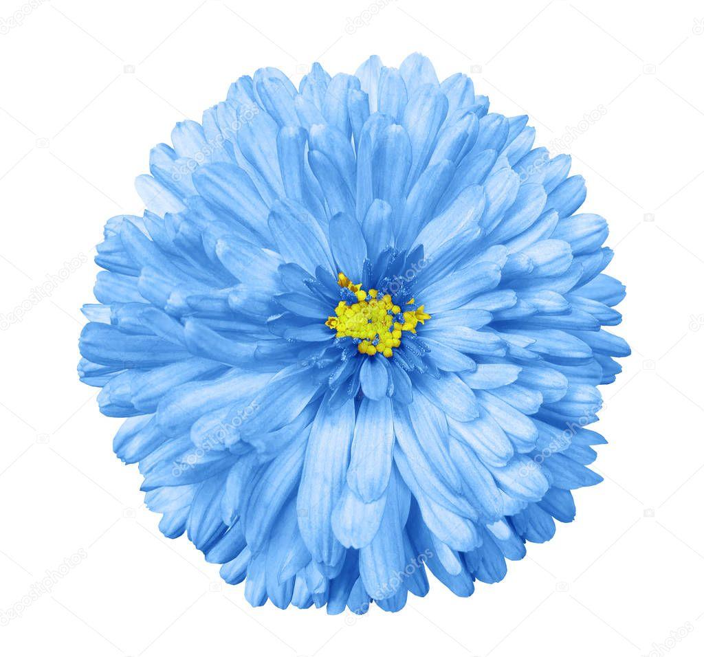 blue flower white isolated