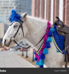 white pony smart harness city downtown animals city using ponies stock photo [ 1600 x 1167 Pixel ]