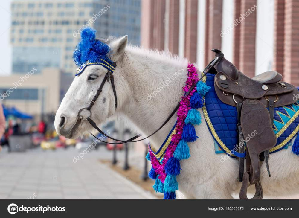 medium resolution of white pony smart harness city downtown animals city using ponies stock photo