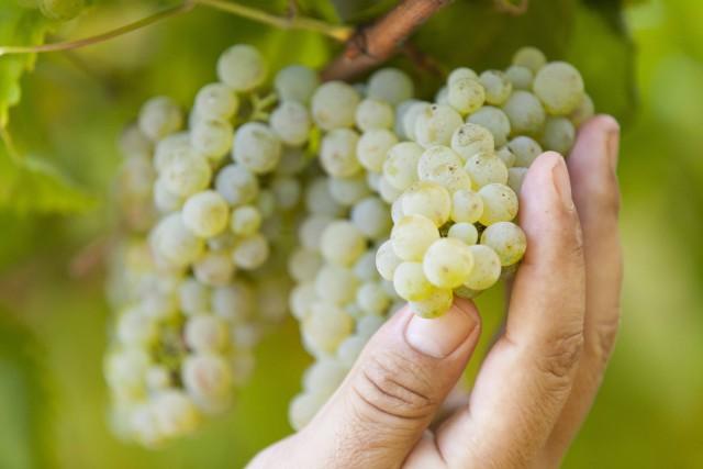 Ruta del vino de Rías Baixas http://beberiasbaixas.com/