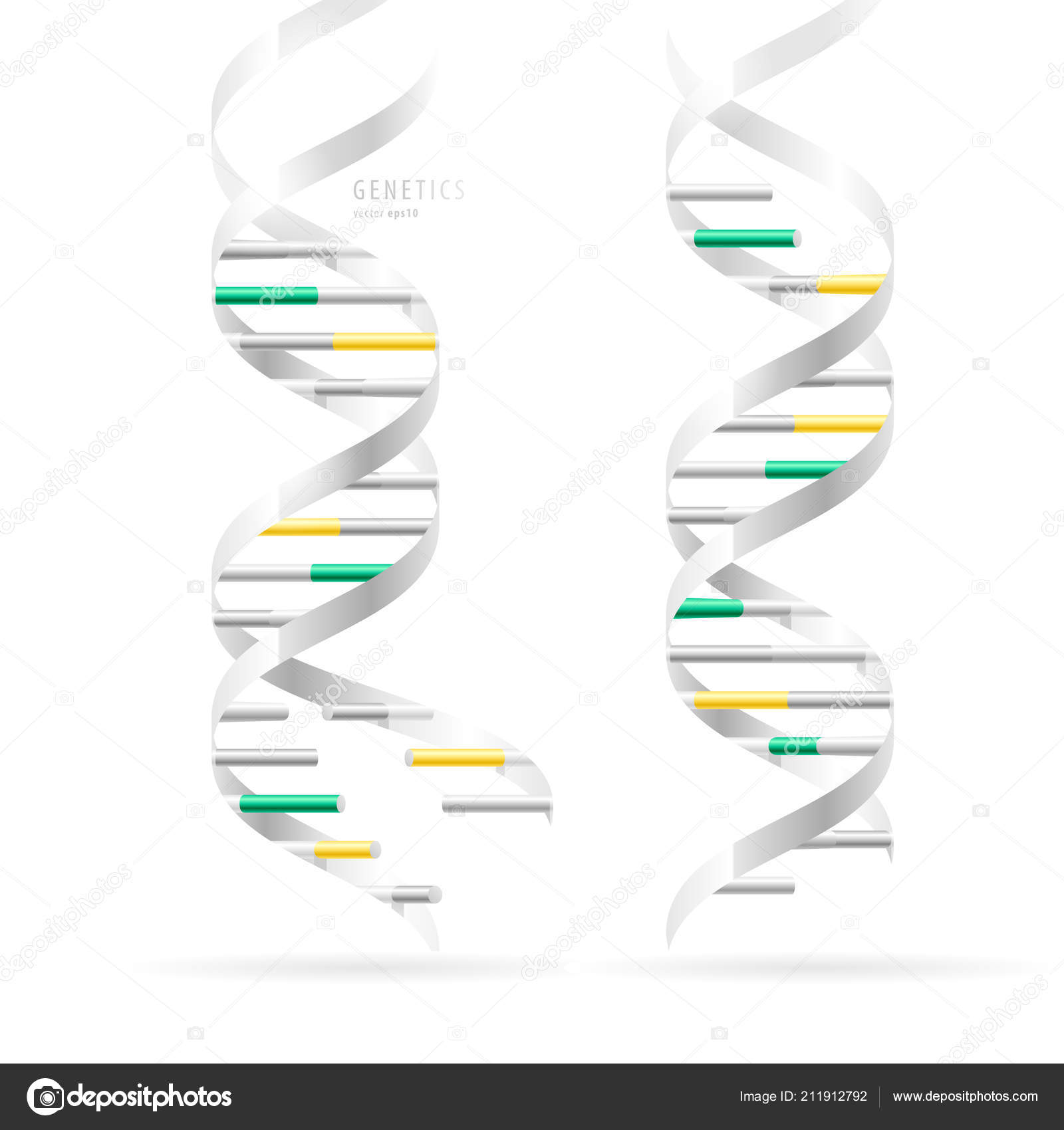 Dna Double Helix Realistic Structural Models Isolated